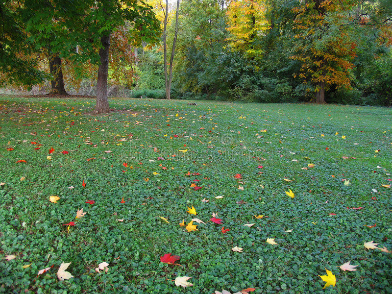 листья упаденные осенью Стоковая Фотография