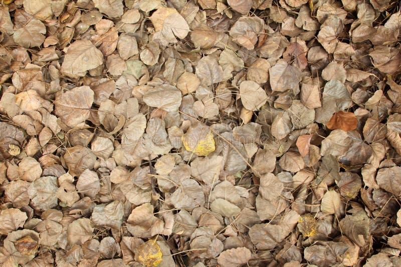 Листья упаденные Брайном кладя на том основании стоковое изображение