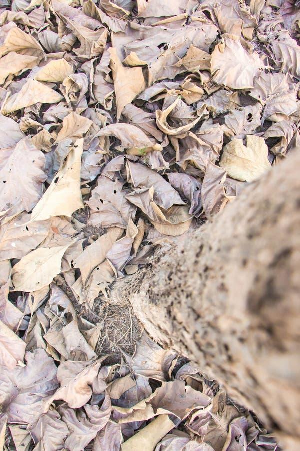 Листья упаденные Брайном стоковые фотографии rf