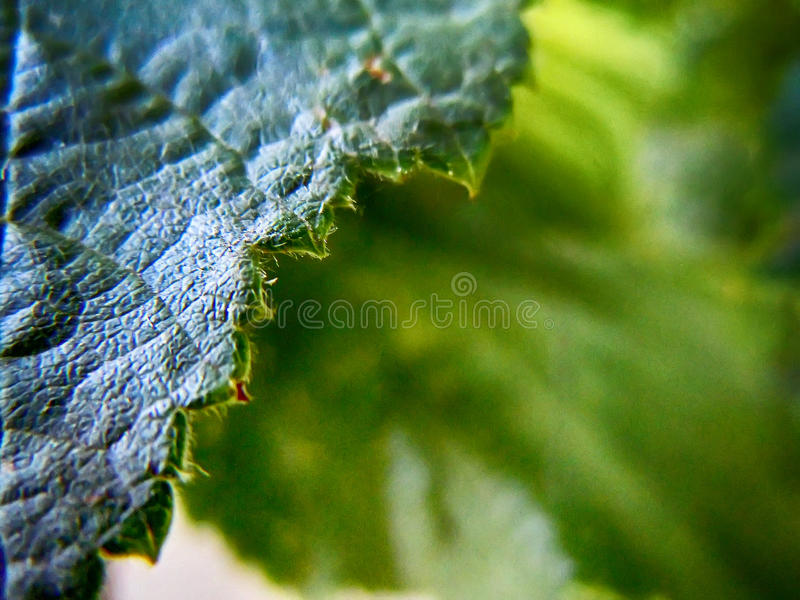Листья фундука стоковые фото