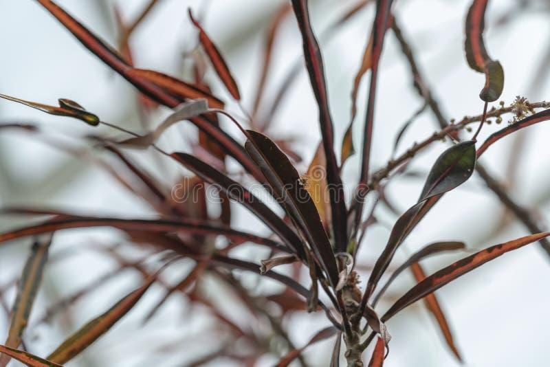 Листья цветка темного коричневого цвета стоковое изображение rf