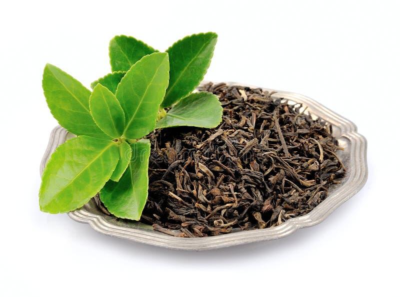 Download Листья чая стоковое изображение. изображение насчитывающей бело - 33732103