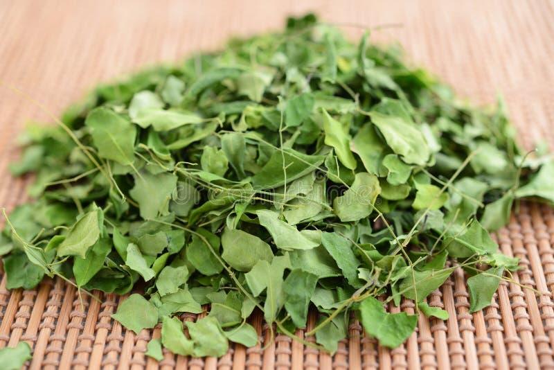Листья чая Moringa стоковое фото rf