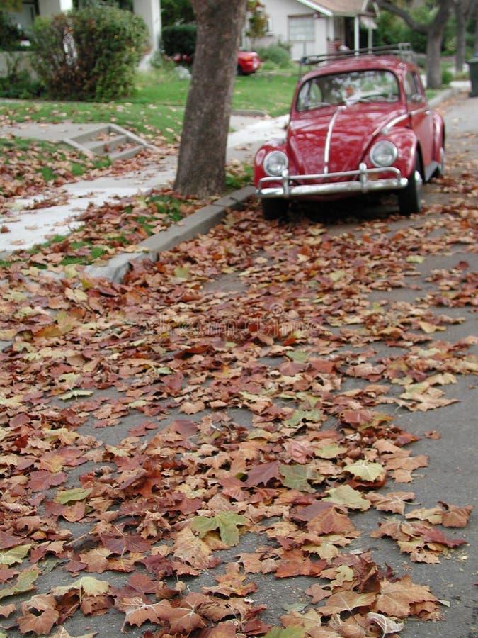 листья черепашки стоковые фотографии rf
