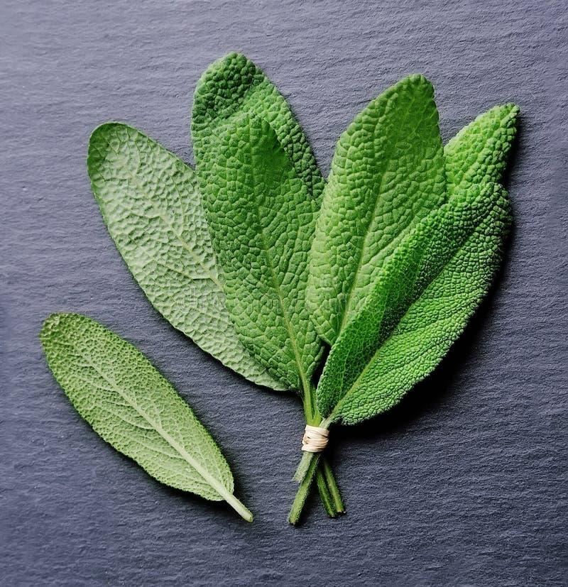 Листья шалфея стоковое фото rf