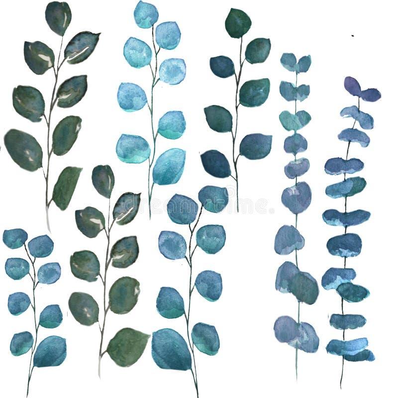 Листья эвкалипта серебряного доллара иллюстрация вектора