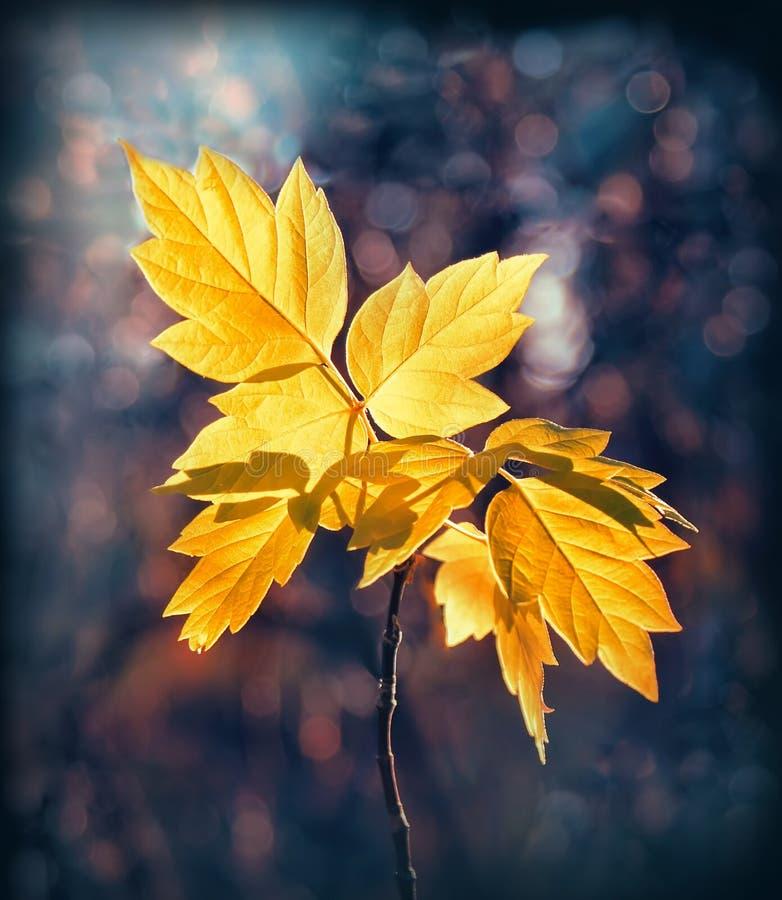Download листья стоковое изображение. изображение насчитывающей яркое - 18395405