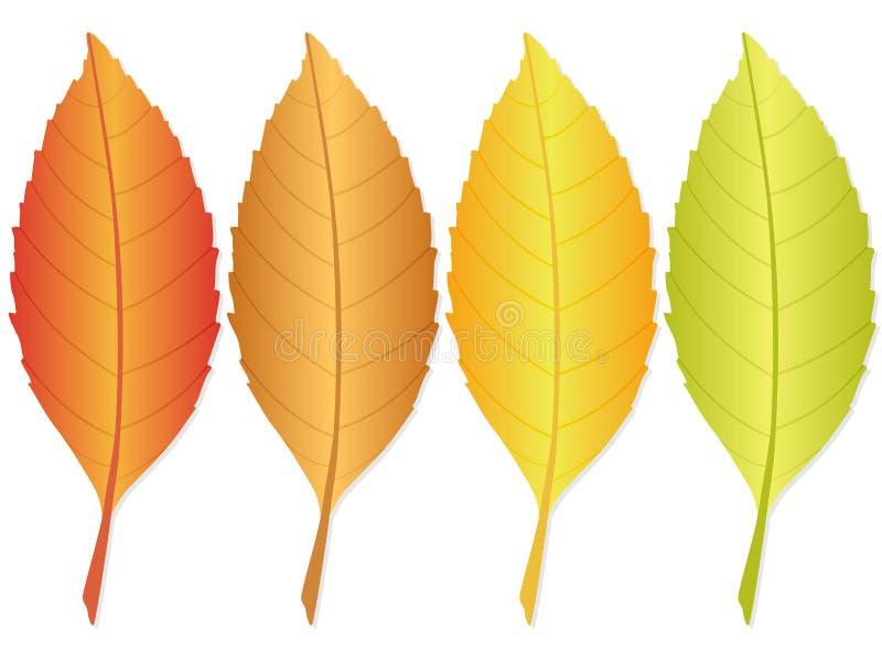 листья 2 осеней бесплатная иллюстрация
