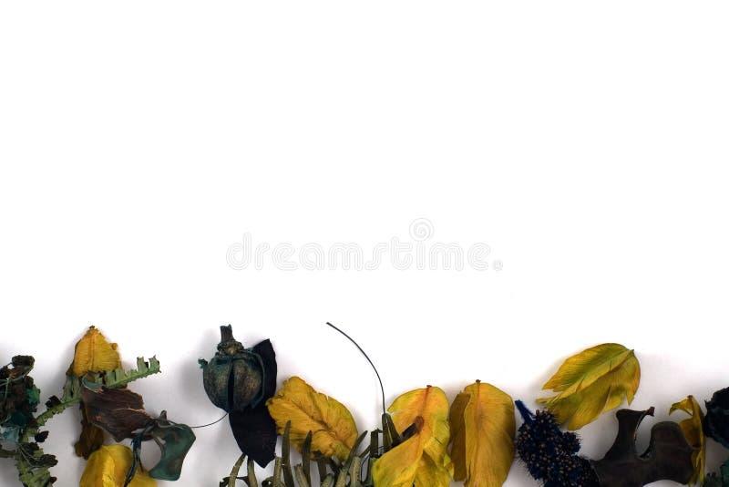 листья иллюстрация вектора