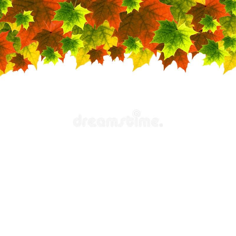 Download листья иллюстрация штока. иллюстрации насчитывающей здорово - 6858894