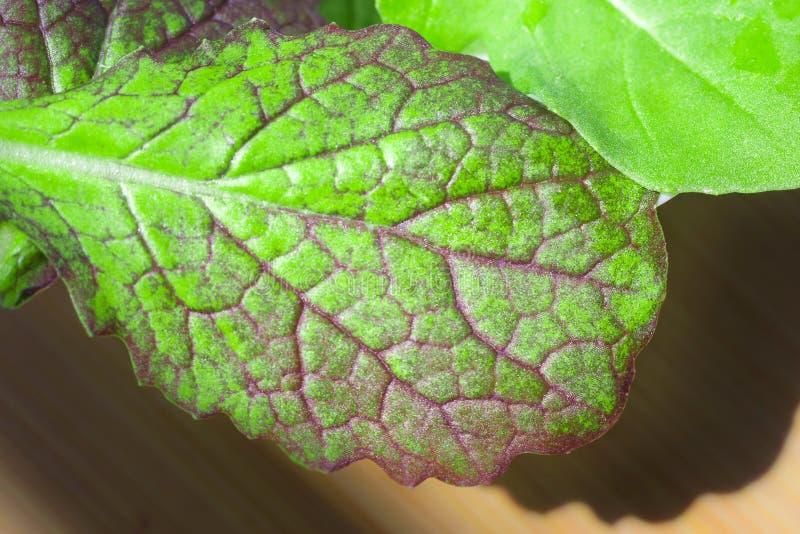 Листья Arugula и мустарда стоковые изображения