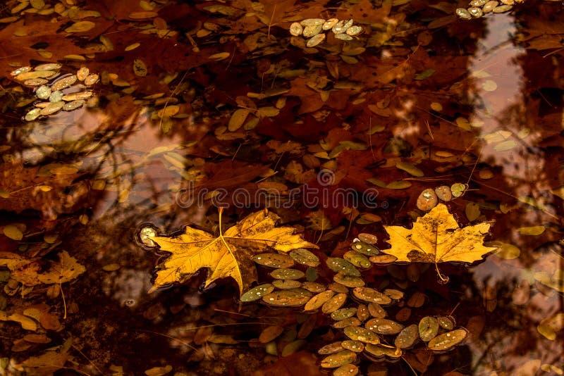 Листья Autum стоковая фотография rf