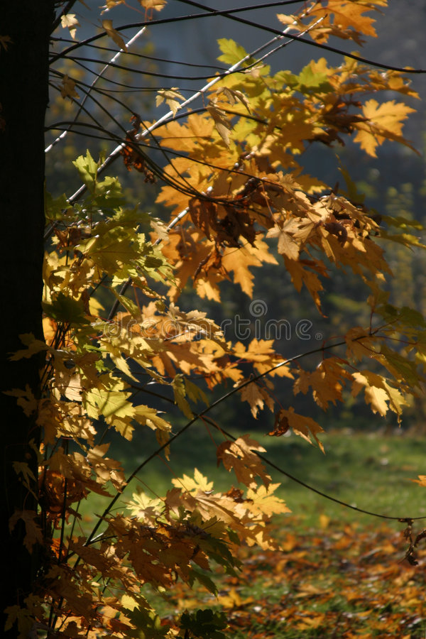 листья Backlight Стоковая Фотография RF