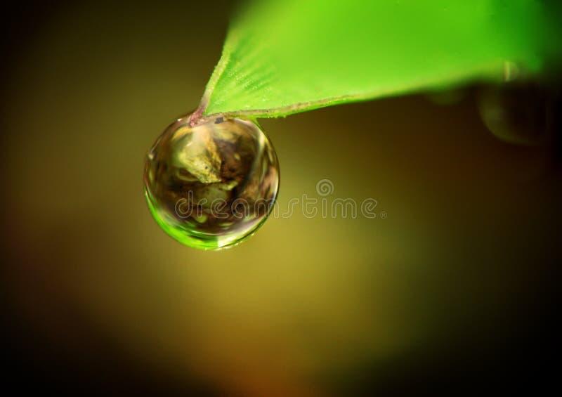 листья dewdrop вися стоковое изображение rf