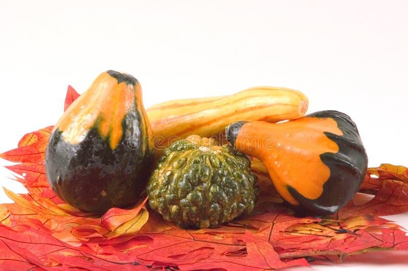 листья gords падения стоковые фотографии rf