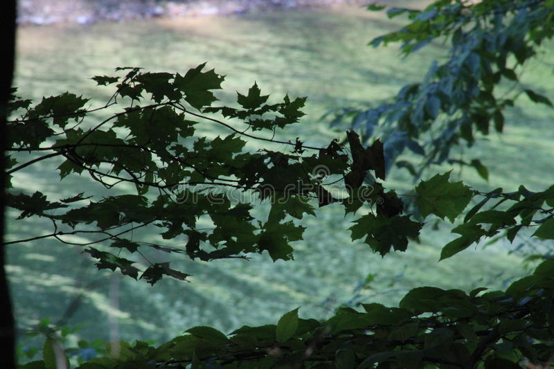 Листья Silouet стоковое изображение rf