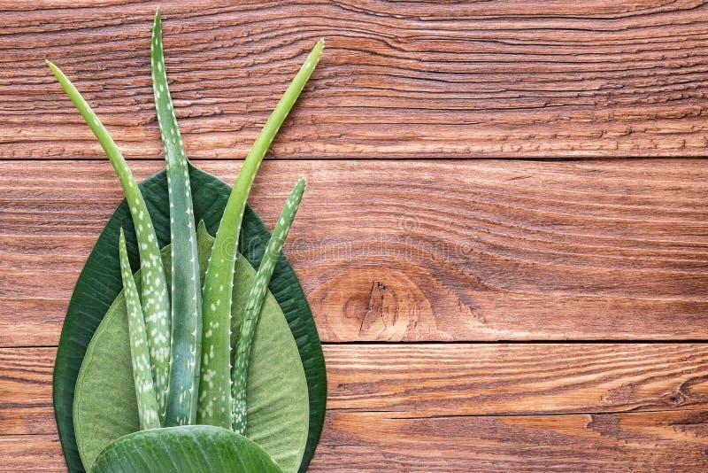 Листья vera алоэ на деревянном столе стоковые изображения