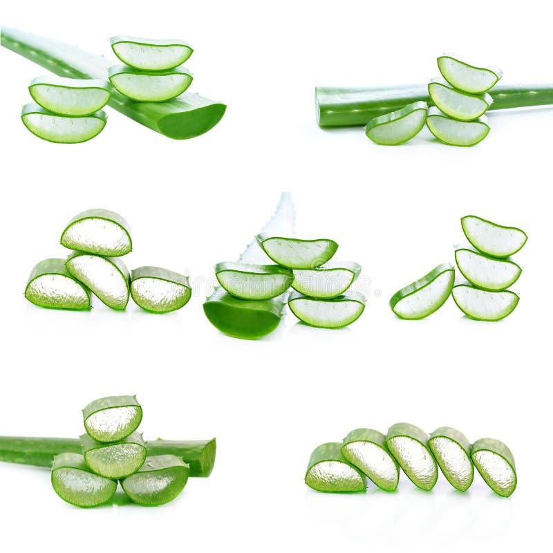 Листья vera алоэ свежие на белой предпосылке стоковые изображения