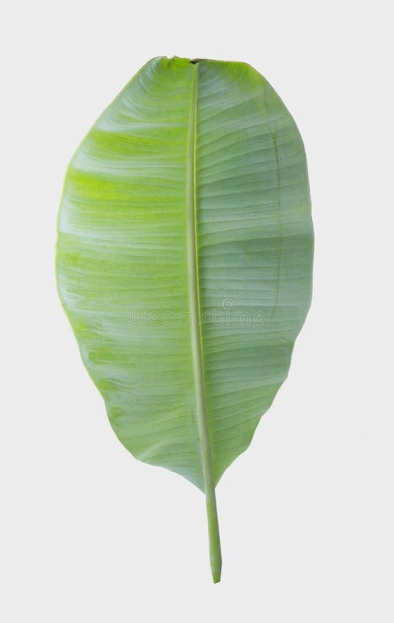 Лист банана изолированные на белой предпосылке с путем клиппирования стоковая фотография rf