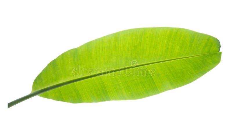 лист банана Изолировано на белой предпосылке с путем клиппирования стоковые изображения rf