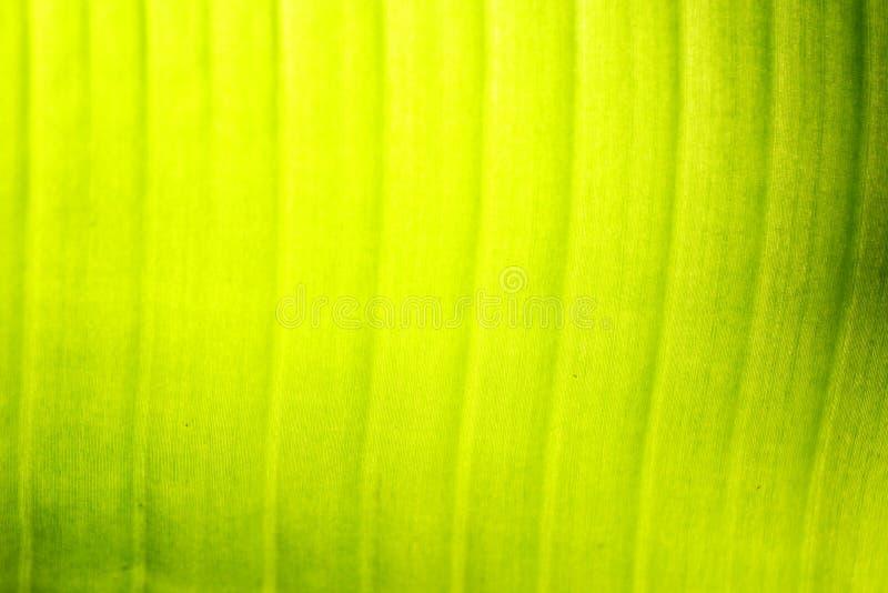 Лист банана стоковое изображение