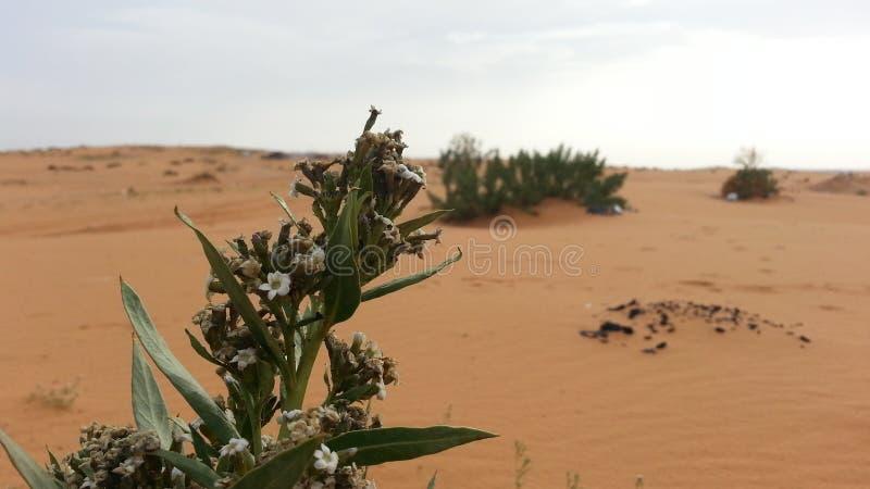 Лист в пустыне стоковое фото rf