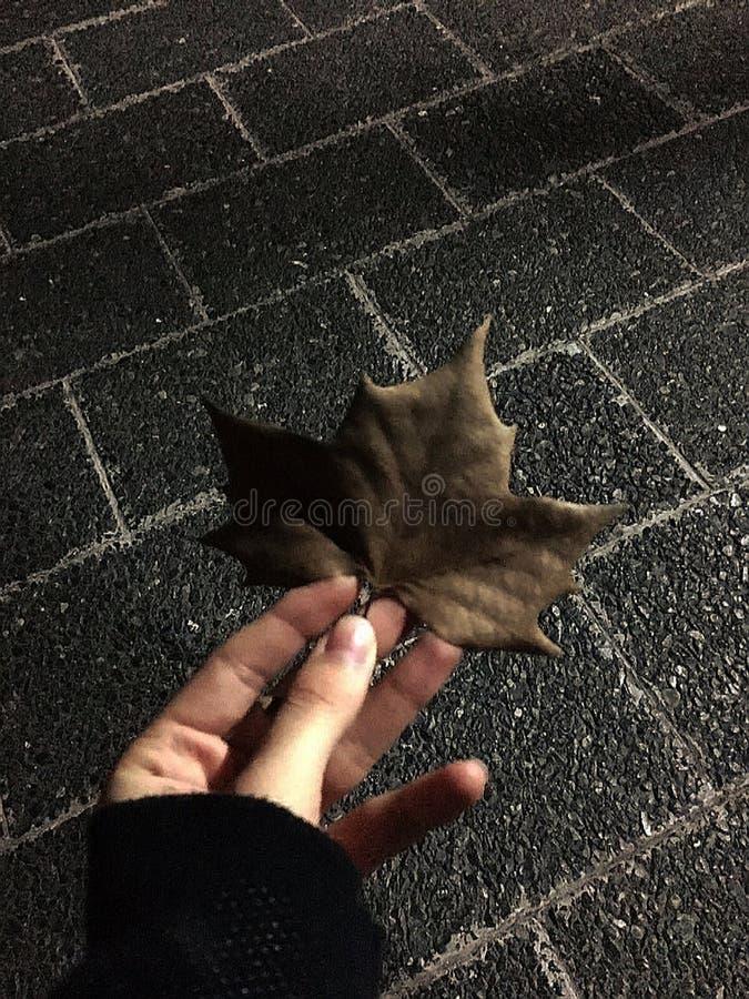 Лист дерева стоковое изображение