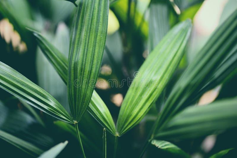 лист зеленого цвета тропического завода листьев ладони в предпосылке  стоковые фото