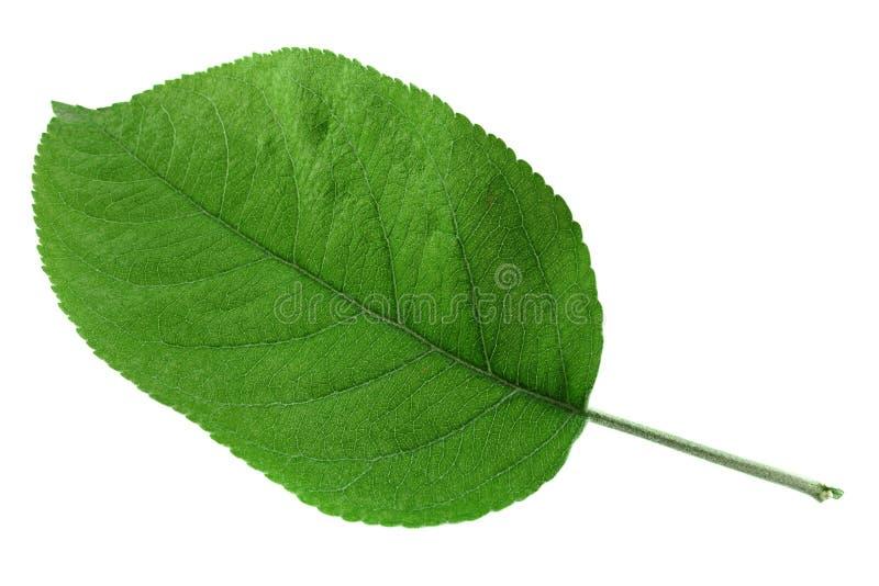 Лист крупного плана плодоовощ Яблока стоковое изображение rf