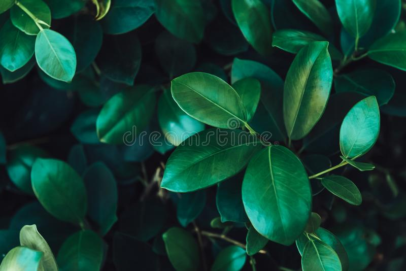 Лист крупного плана темные ые-зелен стоковое изображение rf