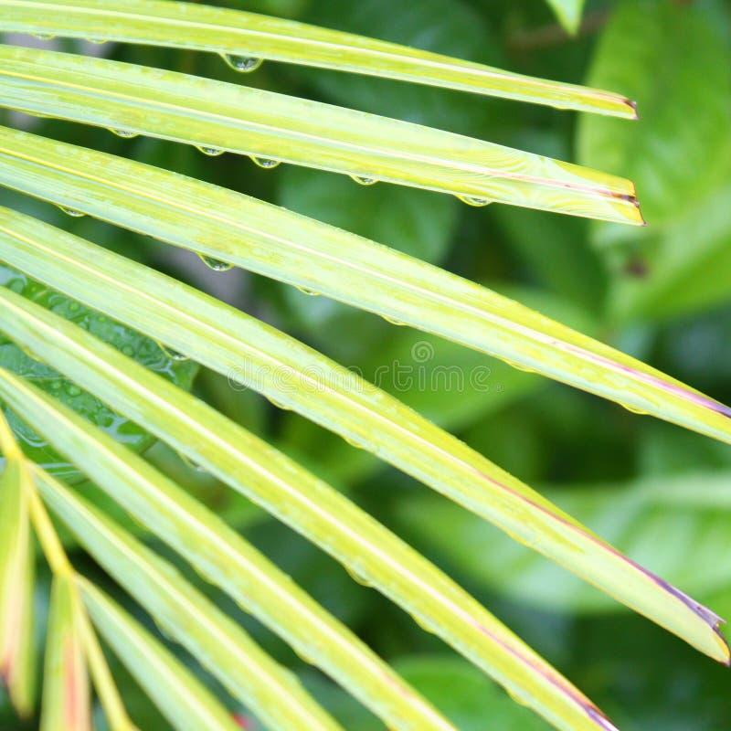Лист ладони на дождливый день стоковое изображение rf