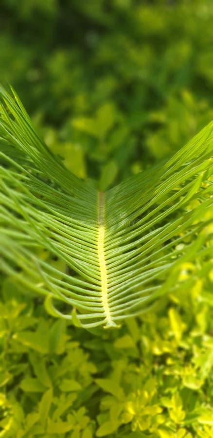 Лист ладони с зеленой предпосылкой растительности стоковая фотография