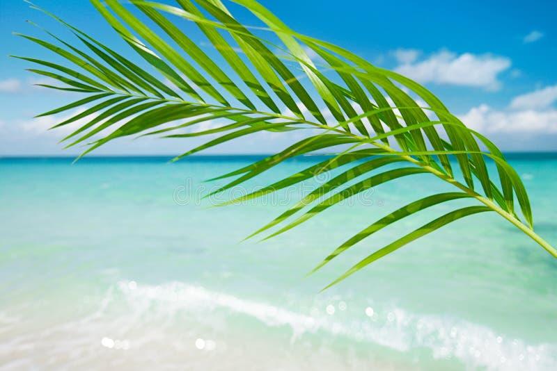 Лист ладони, тропическое голубое море под солнцем стоковое фото rf
