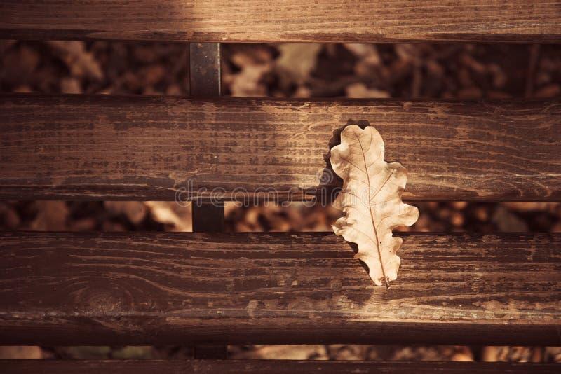 Лист на деревянной скамье, ландшафт дуба осени стоковое фото rf