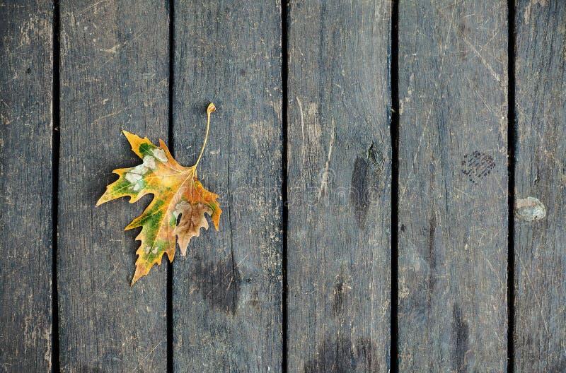 Лист на деревянном поле стоковая фотография