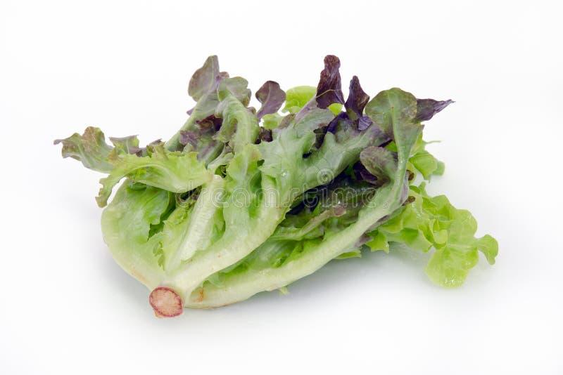 Лист овоща салата изолированные на белой предпосылке стоковые изображения
