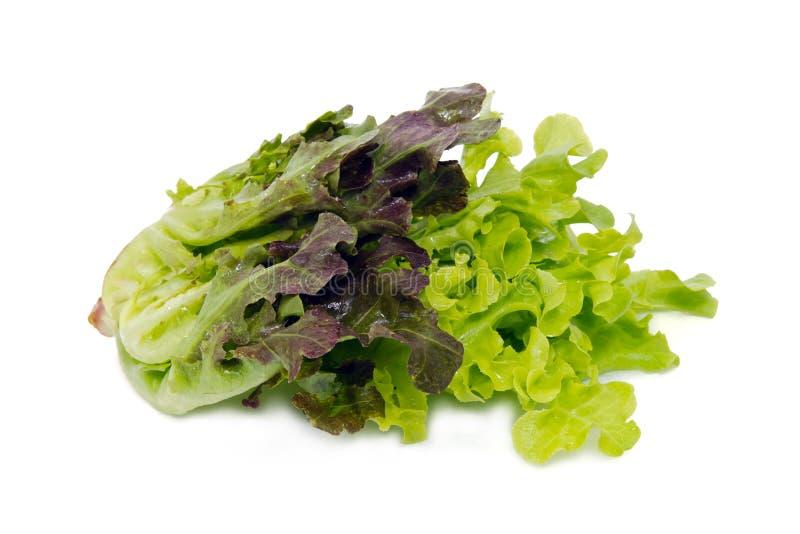 Лист овоща салата изолированные на белой предпосылке стоковые фотографии rf