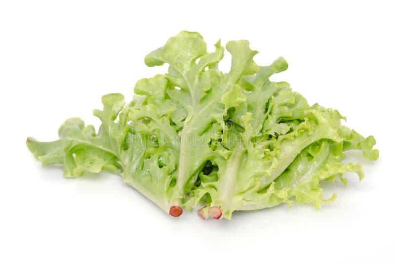 Лист овоща салата на белой предпосылке стоковые фотографии rf