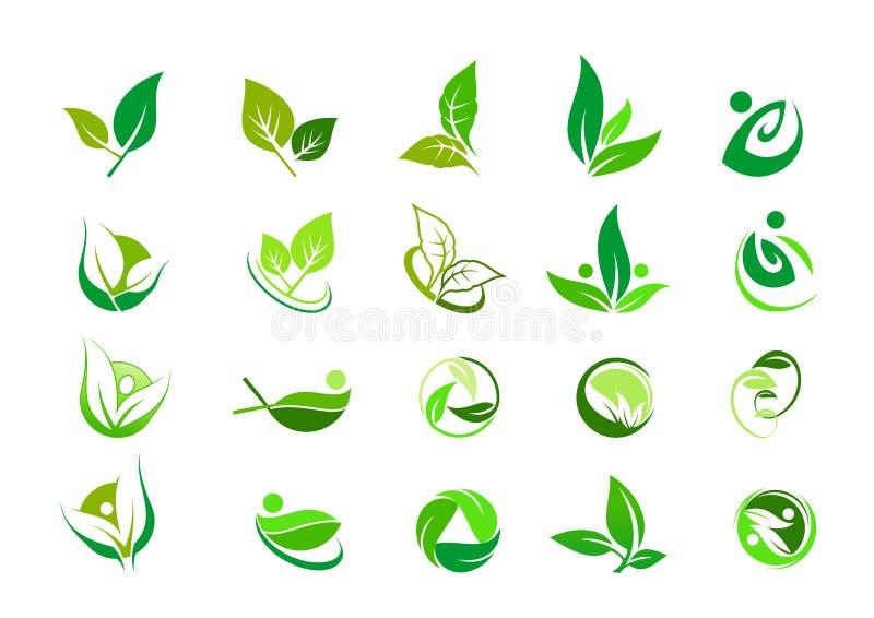 Лист, логотип, органический, здоровье, люди, завод, экологичность, комплект значка дизайна природы иллюстрация вектора