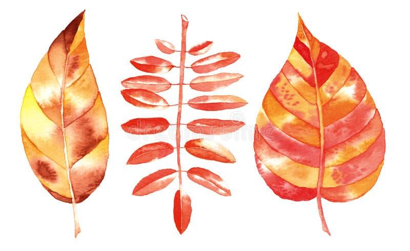 Лист осени акварели иллюстрация штока