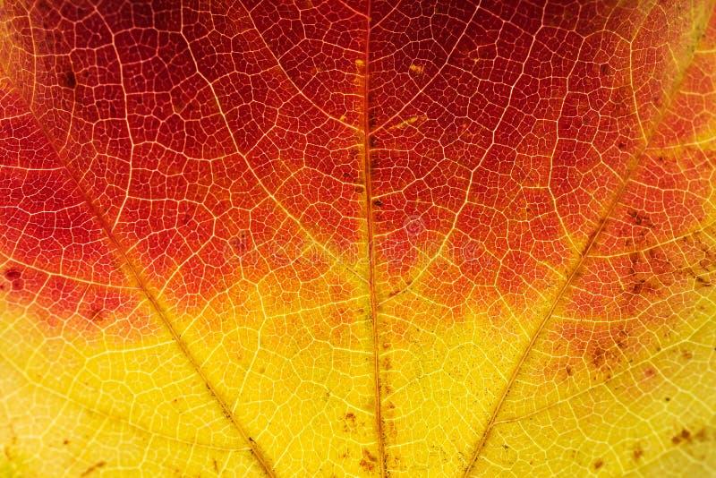 Лист осени, конец вверх стоковое изображение rf