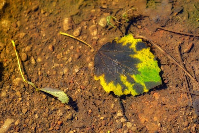 Лист осени под поверхностью воды стоковые фото