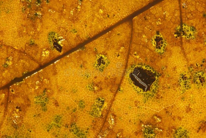 Лист осени стоковое фото rf