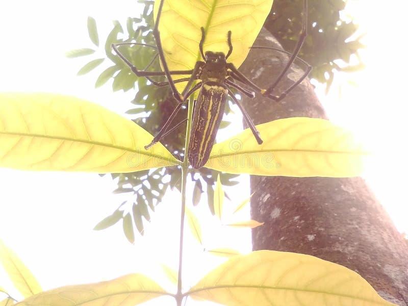 Лист паука стоковое фото rf