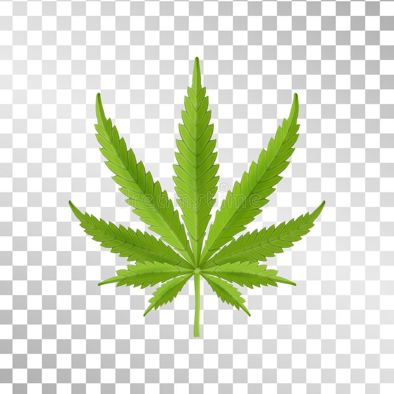 Лист пеньки изолированные на прозрачной предпосылке Реалистическая марихуана Завод конопли также вектор иллюстрации притяжки core бесплатная иллюстрация