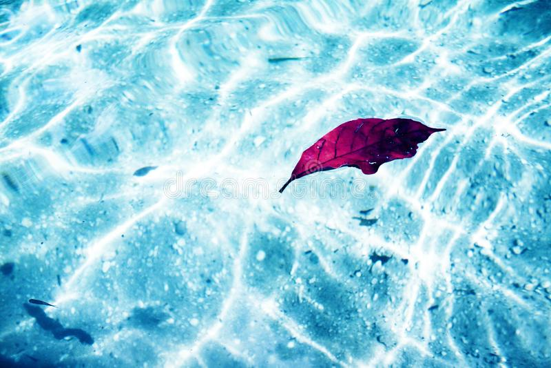 Лист плавая в красивое озеро с кристаллом - ясным стоковые фото