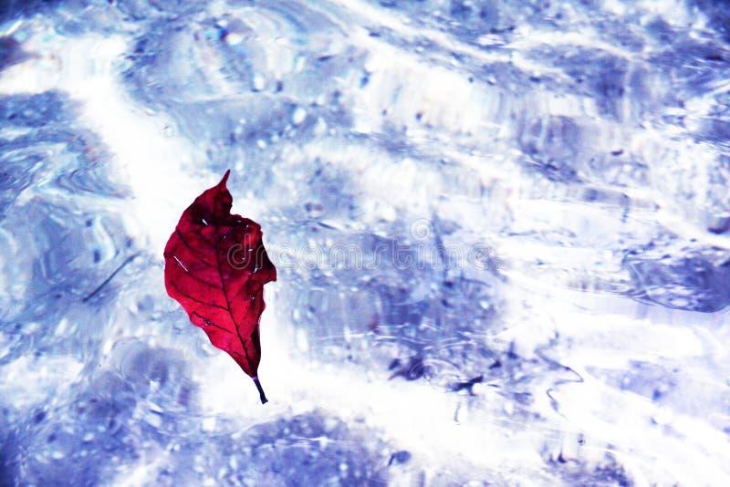 Лист плавая в красивое озеро с кристаллом - ясным стоковые изображения rf