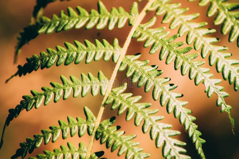 Лист природы стоковая фотография rf