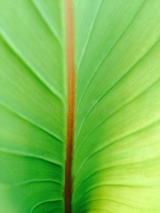 Лист сада зеленые стоковое фото