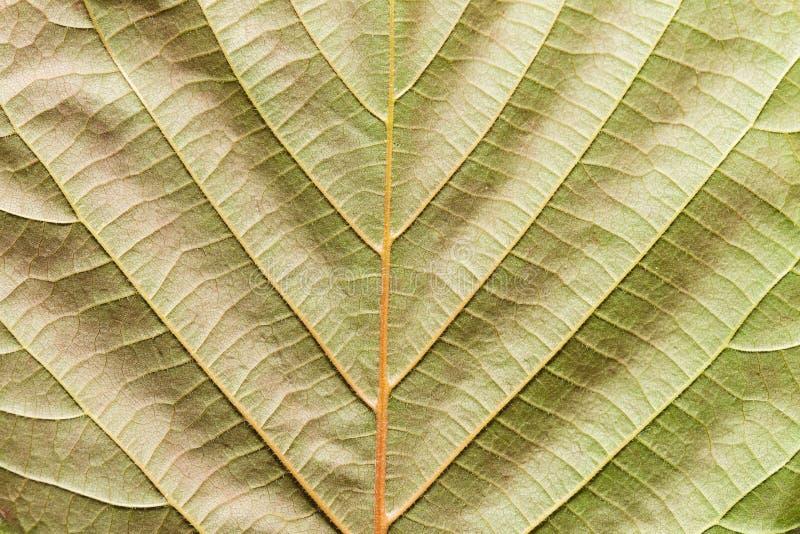 Лист с теней стоковое фото